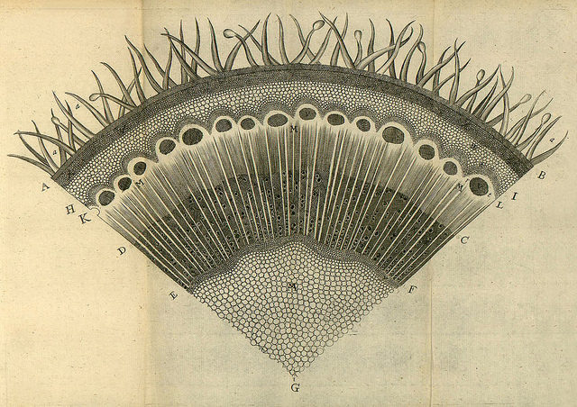 Nehemiah Grew's Anatomy of Plants (1680) | The Public Domain Review
